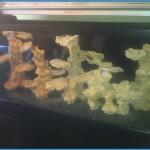 Finalising the main aquascaping using ceramic media