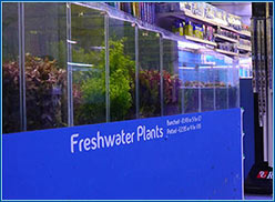 Aquahome Tropical Plants.jpg