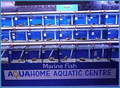 Aquahome Marine Section Front