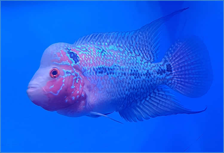 Tropical Fish | Tropical Plants