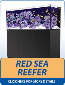 Red Sea Reefer