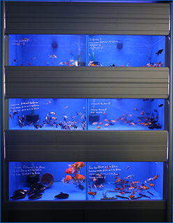 Aquahome Coldwater Fish