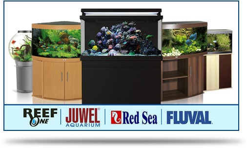 Aquarium Displays
