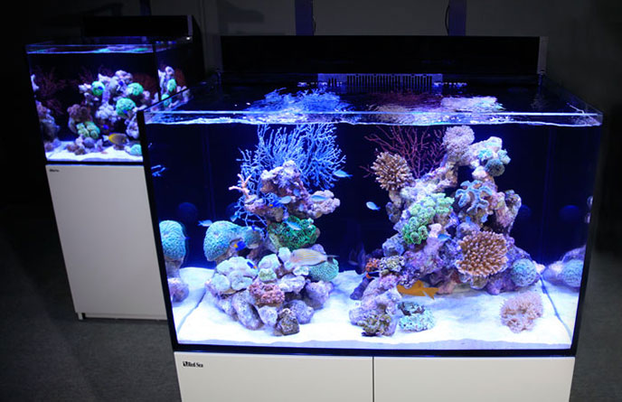 red sea e-series reef spec