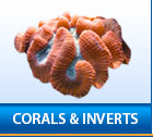 Corals and Inverts
