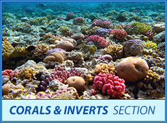 corals and in the section