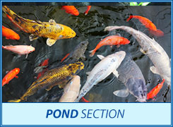 Pond section