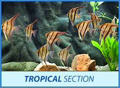 tropical section