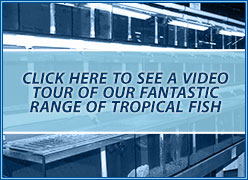 tropical Fish section video tour