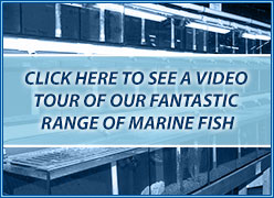 Marine section video tour