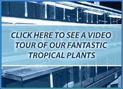 tropical plants section video tour